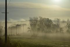 Un matin, juste avant Blaine (armanet.philippe) Tags: automne louhans blaine hameau saôneetloire bresse bourgogne campagne brume brouillard frog couleurs arbres nature landscape novembre matin ombre ombres lumière