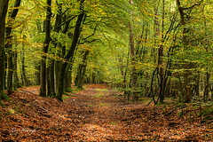 Autumn | Herfst Leuvenum (Leo Kramp) Tags: web manfrotto410juniorgearedhead wwwleokrampfotografienl jaargetijden gitzogt3542ltripod accessoires plaatsen photography nederland leokrampfotografie leuvenumsebossen data 2019 2010s herfst accessoiries autumn netherlands places harderwijk gelderland
