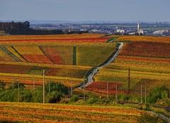 Autumn in Champagne (v o y a g e u r) Tags: route lines vignes vineyards paisaje paysage landscape color colours champagne france otono herbst november october autumn hank