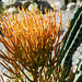 Atlantis Cactus Park