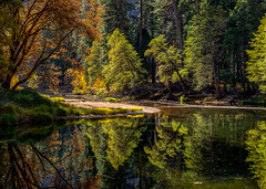 Merced River Reflection in Yosemite Valley (Jeff Sullivan (www.JeffSullivanPhotography.com)) Tags: trees reflection mercedriver yosemite valley national park fall colors photography workshop yosemitenationalpark yosemitevalley yosemitevillage mariposacounty california usa nature landscape travel night photographer canon eos 5d mark iv photo copyright 2019 jeff sullivan november