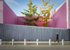 Oasis (ouvert de 14h à 16h) (PhlippeC.) Tags: arbre tree automne autumn ville reims marne plots rue street green vert jaune yellow urbain urban rose magenta