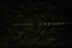 水鏡の上 #5ーOn a glassy surface of water #5 (kurumaebi) Tags: yamaguchi 秋穂 山口市 nikon d750 nature landscape 青鷺 helon アオサギ 鷺 dusk reflection
