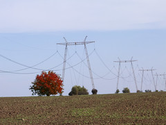 Red (Dumby) Tags: landscape ilfov românia outdoor autumn fall field red tree nature colors