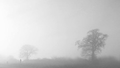 A Misty Morning (Padski1945) Tags: monochrome monochromephotography blackandwhite blackandwhitephotography blackwhite blackwhitephotography mono landscape mistymorning mist