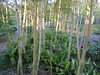 Bosque de Bambú (Samuel Avilés) Tags: japón casajaponesa paisaje castillojaponés japonés otoño bandera banderajapón banderajapon hiragana río bosquedebambu bosque bambú