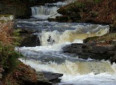 Small Falls (Diane Marshman) Tags: waterfalls flowing water creek stream gushing falls rocks stones weeds ferns fall autumn season pa pennsylvania state nature stonewall leaves