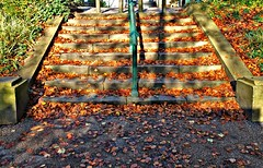 Autumn park steps in Preston (Tony Worrall) Tags: preston lancs lancashire city welovethenorth nw northwest north update place location uk england visit area attraction open stream tour country item greatbritain britain english british gb capture buy stock sell sale outside outdoors caught photo shoot shot picture captured ilobsterit instragram photosofpreston scene autumn season fall leaves gold park steps climb leaf golden rail millerpark shadows dailyphoto phtotoftheday