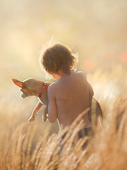 Carried Home ({jessica drossin}) Tags: jessicadrossin dog pet child kid back turned away grass yellow gold summer