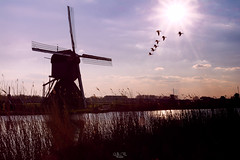 Kinderdjik mill against the light in the evening (Gilles B. Photographe) Tags: mill wind spring netherlands historic nature water wing background air site outdoors environment goose geese energy kinderdijk kinderdjik agriculture traditional heritage landscape sunset power old sky dutch grass vintage rural travel picturesque world holland countryside canal unesco scenery beautiful river architecture windmill history wallpaper green culture europe polder field