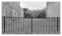 Vacant Lot (Timothy Valentine) Tags: blackandwhite camera2 silverefex friday 1019 vacation 2019 berkshires fence adams massachusetts unitedstatesofamerica