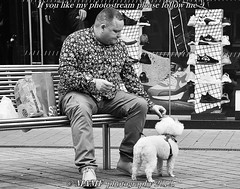 👍 One man and his dog. 👍 (6m views. Please follow my work.) Tags: amateurphotographeramateurblackandwhiteblackwhitebwbiancoenerobritainbrilliantphotoblancoblancoynegrocandidcitycitycentrecandidstreetphotographycandidportraitenglandenblancoynegroennoiretblancexcellentphotoexcelle zwartenwit zwartwit zwart man male mamf monochrome nikon nikond7100 noiretblanc noir negro onthestreet photography photo pretoebranco photograph photographer person people portrait pedestrian quality qualityphotograph schwarzundweis schwarz street town uk unitedkingdom urban westyorkshire zwartenwitzwartwitzwartmanmale leeds ls1 briggateleeds amateur candid streetlife candidstreetphotography candidportrait england google googleimages interesting bw blackandwhite gb greatbritain