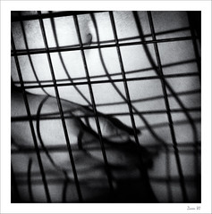 IMG_3363-Edit-Edit (zaom80) Tags: eos760d canon lensbaby lensbabyspark blackandwhite bw bwportrait monochromatic monochrome nude hand grid squareformat