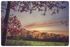 Autumn Breeze (Stathis Iordanidis) Tags: autumn trees grass grassland nature fujifilm x100 amazing landscape colorful sky