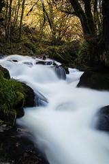 Golitha Falls In Flood (PedroLanders) Tags: liskeard cornwall golitha river water cascade waterfall
