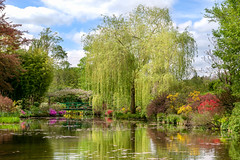 The water garden of Claude Monet (Gilles B. Photographe) Tags: nympheas normandie bridge blossom beauty pond plant sky horizontal daylight landscape plants flower reflections normand pleinairpainting paint 19th historical bright botanical green impressionist luminous france spring natural normandy flowers nature water lake background trees flora outdoors environment claude impressionism view waterlilies tree foliage travel tourist european century tourism outdoor seasons season french clouds garden famous blue colorful lily beautiful artist painterly flowering monet landmark floral history europe arthistory giverny