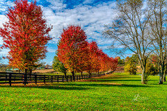 "Fall in Kentucky (JuanJ) Tags: nikon d850 lightroom art bokeh lens light landscape happy naturephotography outside nature people white green red black pink skyportrait location architecture building city square squareformat instagramapp shot awesome supershot beauty cute new flickr amazing photo photograph fav favorite favs picture me explore interestingness friends dof sunset sky flower night tree flowers portrait fineart sun clouds kentucky lexington fall autumn nikonfxshowcase ""nikon fx showcase"""