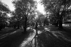 menton olive trees (jonnybaker) Tags: france menton olivetree