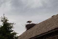 Howdy Neighbor! (Giorgi Natsvlishvili) Tags: stork georgiacountry georgian géorgie georgien géorgien georgia eos eosm50 birds bird nest canoneosm50 canonm50 canonmirrorless canon caucasus m50 mirrorless milvus1450 milvus zeiss zeissmilvus carlzeissdistagon carlzeissmilvus carlzeiss