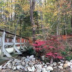 Park School ~ Fall woods (karma (Karen)) Tags: parkschool pikesville maryland woods fallcolors stream rocks bridges fences hff iphone