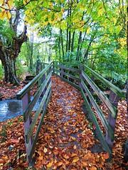 La Côte Chalonnaise (Céline GOMES) Tags: pont automne feuille bourgogne passerelle