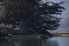 The Big Cypress & Morning Walkers Pausing (marlin harms) Tags: morrobaystatepark cypress