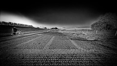 Dike Racer (Alfred Grupstra) Tags: blackandwhite oldfashioned ruralscene retrostyled monochrome outdoors nature landscape old field sky nopeople tonedimage italy hill cultures lightingtechnique road square nonurbanscene