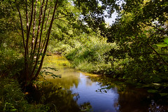 Creek of the French countryside (Gilles B. Photographe) Tags: pastoral france color hautsdefrance nature us leaf oise naturalenvironment bank touristy iledefrance plant vegetation tree noperson waterway scenic reflection outdoors small light valdoise watercourse forest sun wilderness naturallandscape creek landscape naturereserve countrified flora bushes stream grass outdoor rural colorful picturesque santeuil travel exterior blue country promenade beautiful river viosne water countrysidelandscape bucolic green countryside europe vexin tourism