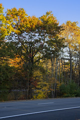 Foliage 19 Oct 2019 (26) (smata2) Tags: autumnfoliage pioneervalley