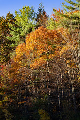 Foliage 19 Oct 2019 (24) (smata2) Tags: autumnfoliage pioneervalley