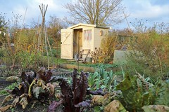 November Allotment (Pumpkins and Bunting) Tags: allotment allotmentshed autumn gardening growyourown organic inspiration