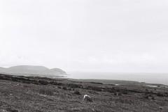 Mayo coastline (Mark Carmody) Tags: film filmisnotdead filmphotography filmisalive ishootfilm canon canona1 kosmo foto kosmofoto 100 dublin mayo