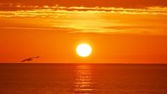 Sunrise - Amanecer (En memoria de Zarpazos, mi valiente y mimoso tigre) Tags: sun sunrise sea seascape seagull clouds skyfire skyred skyscape silhouette amanecer sol mar nubes cielorojo mare alba sole gabbiano gaviota silueta nubole cielo rosso nikon alicante