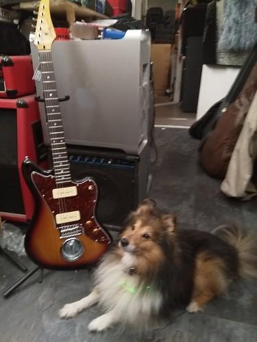 Alwins Mauerspechtgitarre (mit Sheltie)