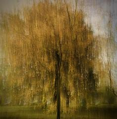 autumn impressions (Zara.B) Tags: iphone intentionalcameramovement icm impressions tree autumn