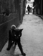 (sharmi_diya06) Tags: street streetphotography streetphot cat animal woman blackandwhite letsexplore