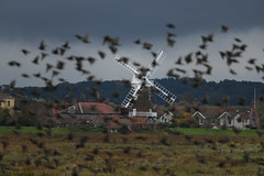 Cley windmill and starlings (PhotoCet) Tags: photocet norfolk cley windmill starlings flock