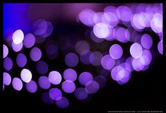 _MG_0297c (Steven Encarnación) Tags: steven encarnacion photographer canon 6d puertorico zeiss planar 85mm f14 bokeh lights purple