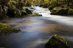 Golitha Falls (PedroLanders) Tags: liskeard cornwall river waterfall cascade golitha autumn
