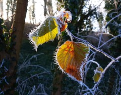 cold and sunny (claudine6677) Tags: cold sunny hoarfrost reif kälte sonnig sonne winter eis ice