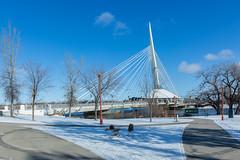 Winnipweg Canada8 (J.Dijkstra) Tags: canada churchill ijsberen