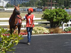 Johnny Too Bad (knightbefore_99) Tags: vancouver bc canada cool west coast eastvan thoroughbred horse cheval hastings racecourse track bet betting awesome reggae jimmy cliff dreads