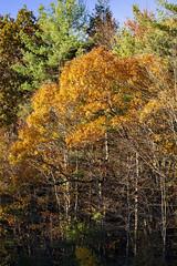 Foliage 19 Oct 2019 (30) (smata2) Tags: autumnfoliage pioneervalley