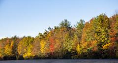 Foliage 19 Oct 2019 (27) (smata2) Tags: autumnfoliage pioneervalley
