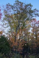 Foliage 19 Oct 2019 (14) (smata2) Tags: autumnfoliage pioneervalley