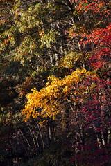 Foliage 19 Oct 2019 (29) (smata2) Tags: autumnfoliage pioneervalley