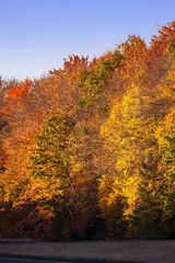 Foliage 19 Oct 2019 (28) (smata2) Tags: autumnfoliage pioneervalley
