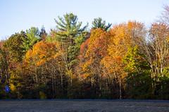 Foliage 19 Oct 2019 (25) (smata2) Tags: autumnfoliage pioneervalley