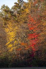 Foliage 19 Oct 2019 (23) (smata2) Tags: autumnfoliage pioneervalley