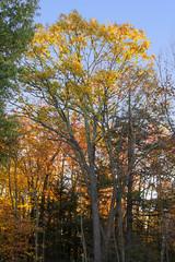 Foliage 19 Oct 2019 (22) (smata2) Tags: autumnfoliage pioneervalley